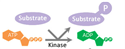 Picture for category Enzyme Activity Assay Kits