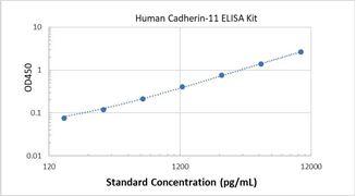 Picture of Human Cadherin-11 ELISA Kit