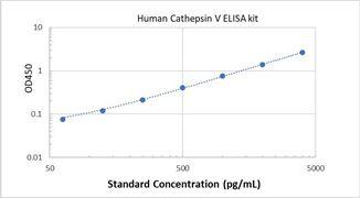 Picture of Human Cathepsin V ELISA Kit