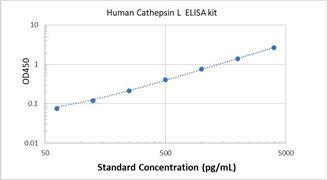 Picture of Human Cathepsin L ELISA Kit