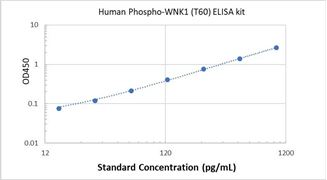 Picture of Human Phospho-WNK1 (T60) ELISA Kit